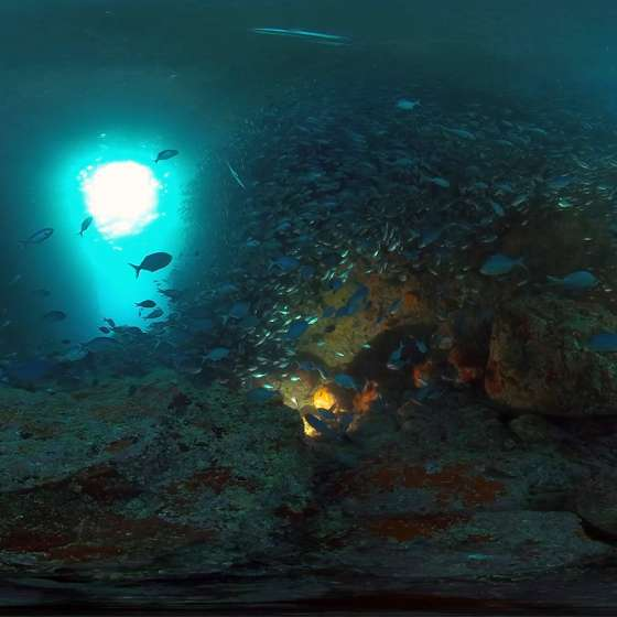 Blue Maomao Arch – One of Jacques Cousteau's Top Ten Dives