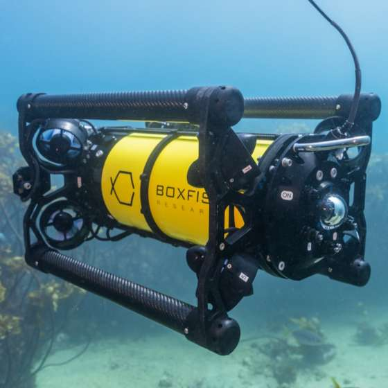 Boxfish ROV underwater inspecting seabed at Poor Knights