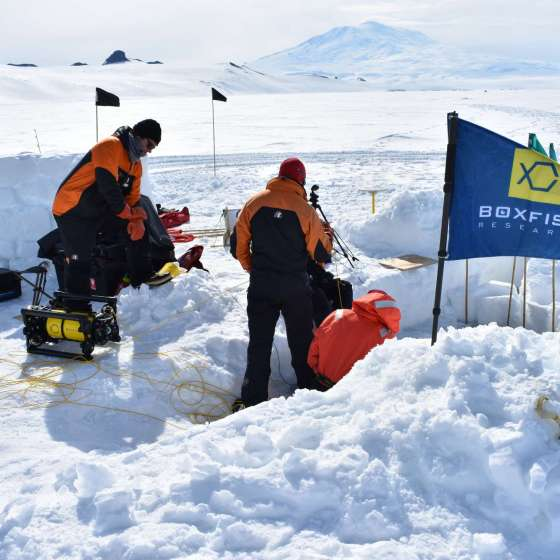 Highlights from Dr. Regina Eisert's Antarctica Expedition 2020